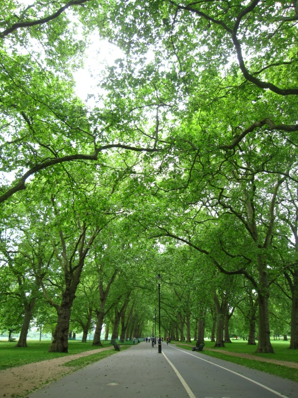 Tree covered path in Hyde Park