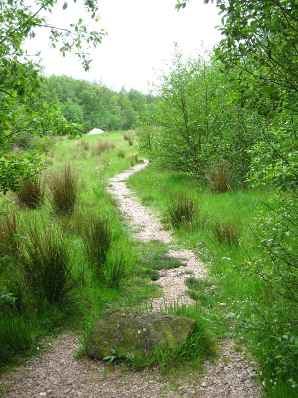 Path opens to clearing